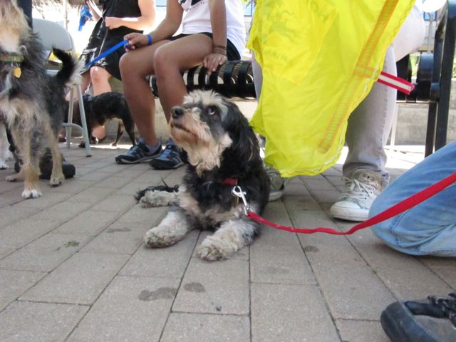 Dog Friendly Emeryville