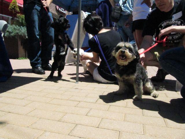 Dog Friendly Malls Bay Area